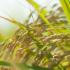 【ふるさと納税】締め切り間近!寄付額1万円あたり10キロ以上のお米がもらえる自治体はコチラ!